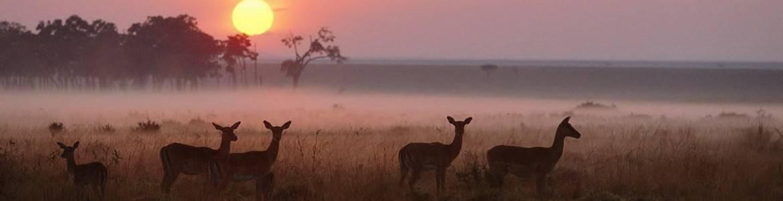 Tourism, photo-safari